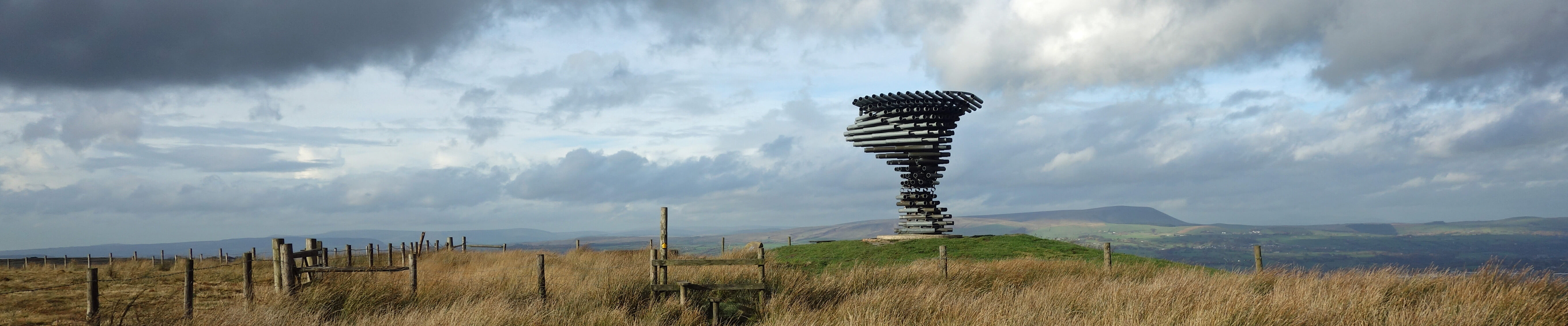 singing ringing tree-felling